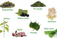 rimedi naturali per le allergie
