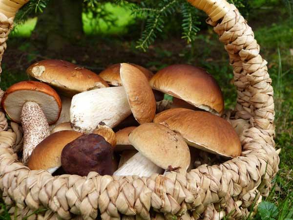 valori nutrizionali funghi porcini